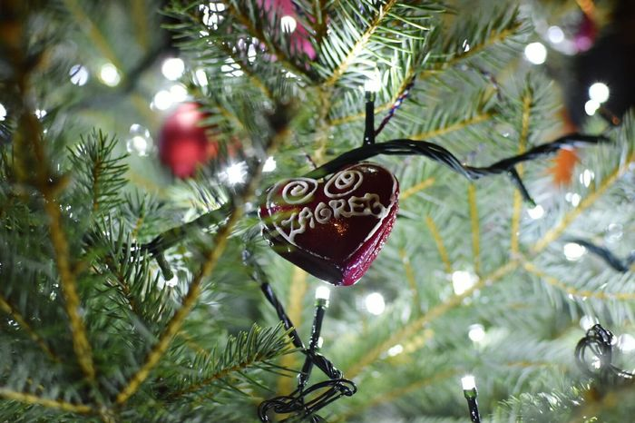 Zagreb Licitar Hearts Heart Details Christmas Tree Christmas Lights Bookeh Effect Green Red Tradition Xmas Decorations Tree Christmas Christmas Decoration Hanging No People Tradition Heart Shape Christmas Ornament Celebration Branch Close-up Outdoors Day Xmas Lights
