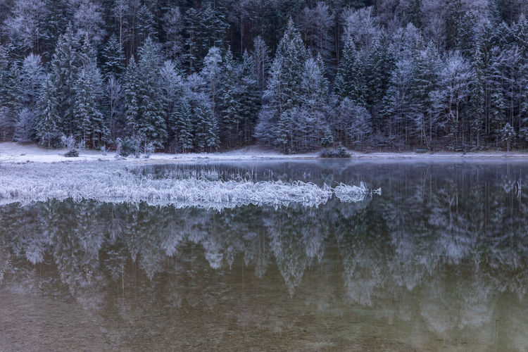 Reflection of snowy trees in lake