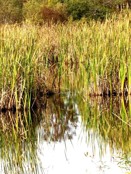 Water Grass Reflection Nature Plant Growth Lake No People Backgrounds Tranquility Outdoors Day