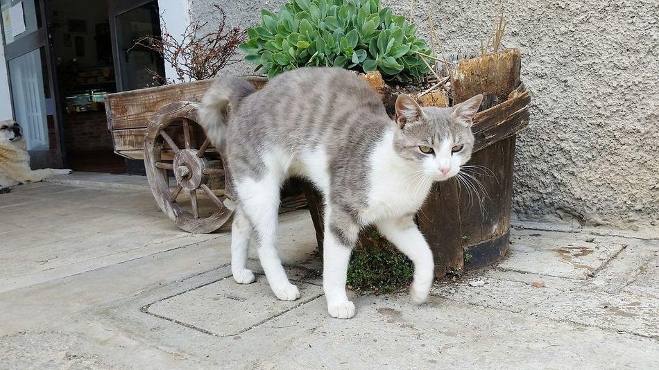 EyeEm Selects Pets Feline Domestic Cat Animal Themes Cat