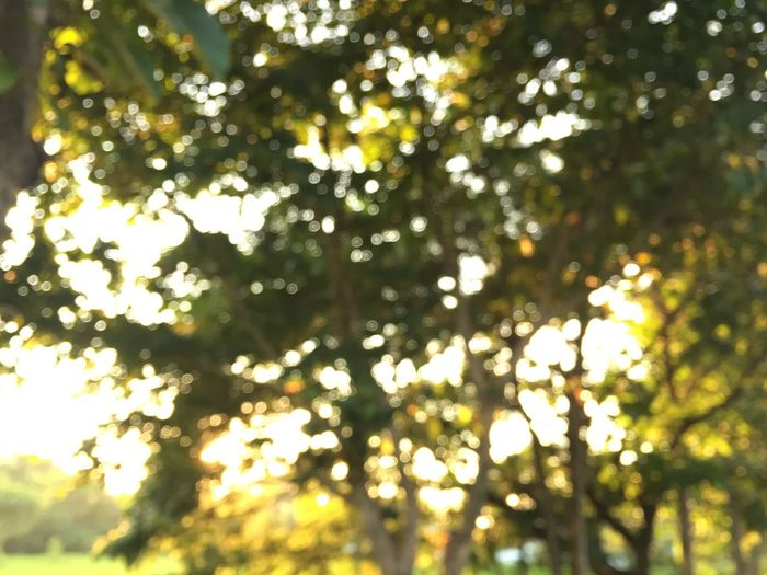 Bokeo shots from the trees and sunset in the evening. Nature Photography Bokeo Evening Copy Space Plant Tree Low Angle View Sunlight Beauty In Nature No People Nature Growth Day Outdoors Backgrounds Branch Full Frame Sunny Green Color Sky Leaf Freshness Plant Part