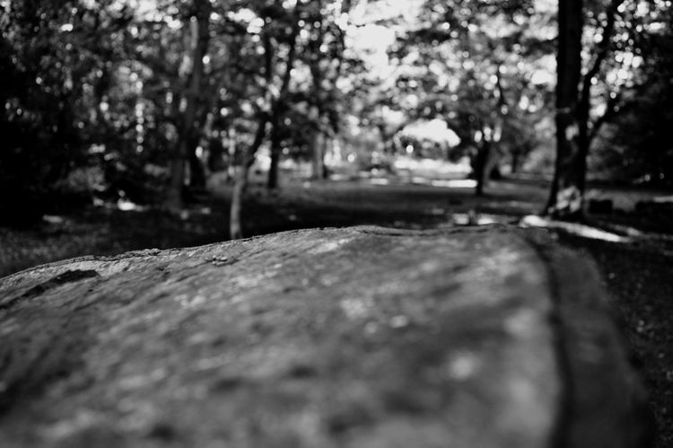 Eppingforest Blackandwhite Mypointofview Nikon D3200 Different Perspective