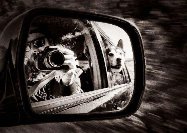 Dakota and I out in an adventure! Reflection Car Close-up Side-view Mirror Outdoors No People Day Siberian Husky Photography