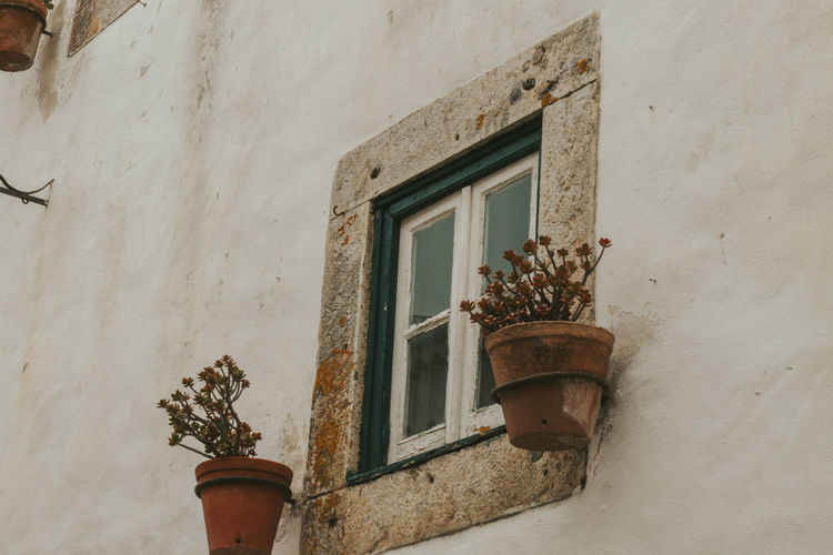 Low angle view of potted plant on wall of building