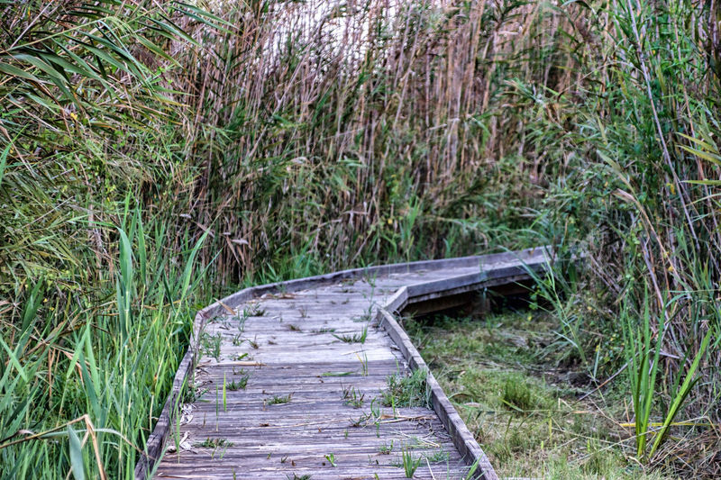 Abandoned Beauty In Nature Day Forest Grass Growth Nature No People Outdoors Pattern Plant Tree Wooden Pathway