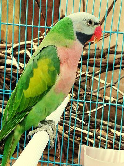 betet Bird