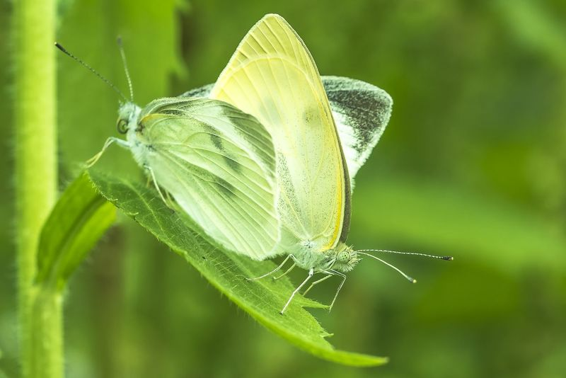 😅R-18 指定…💦 EyeEm Nature Lover Macro Macro_collection EyeEm Macro Lover Pure And Untouched (raw Image) The Purist (no Edit, No Filter) EyeEm Gallery Spring2015 Spring Landscape Cabbage Butterfly