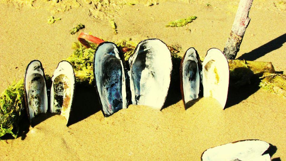 природа и красота Samertime Природа природа🍃 Naturerussia Day Vacations Beauty In Nature Nature Water наречке берег река River ракушки песок Sand Shell Shells🐚