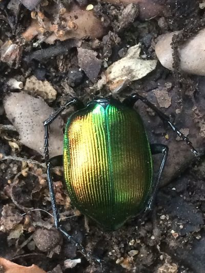 Art Is Everywhere Insects  Insect Animal Wildlife Animal Nature France 🇫🇷 Green Color Green