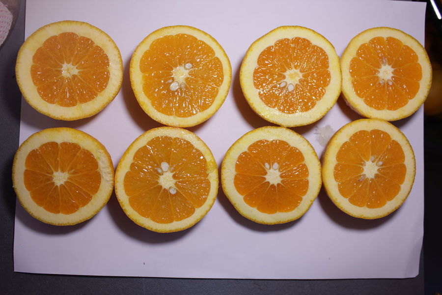 Blood Orange Citrus Fruit Close-up Cross Section Day Directly Above Food Food And Drink Freshness Fruit Halved Healthy Eating High Angle View Indoors  Juice On The Table Orange Orange - Fruit Orange Color Orange Juice  Oranges Ready-to-eat SLICE Still Life Table