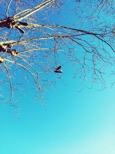 Tree Shoeselfie Shoe Game Blue Sky Outdoors No People Blue Sky