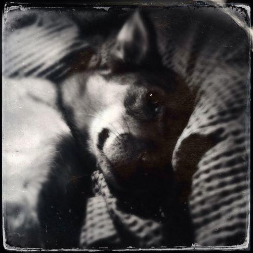 Yuki dog is best dog.