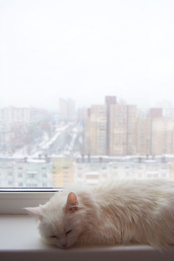 Cat relaxing at window sill