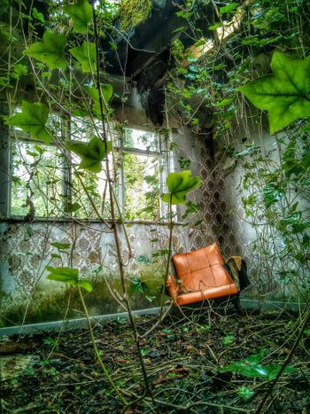 Chair In Room Abandoned Derilict Ivy Vines Retro Styled Orange Chair Distressed Broken Window Hole In Roof State Of Disrepair Original Experiences 43 Golden Moments The Innovator Feel The Journey Showcase June Fine Art Photography Home Is Where The Art Is Hidden Gems  Eyeemphoto Pivotal Ideas Color Palette TakeoverContrast The Secret Spaces Art Is Everywhere Break The Mold TCPM The Photojournalist - 2017 EyeEm Awards The Great Outdoors - 2017 EyeEm Awards The Architect - 2017 EyeEm Awards BYOPaper! Live For The Story Place Of Heart Perspectives On Nature End Plastic Pollution