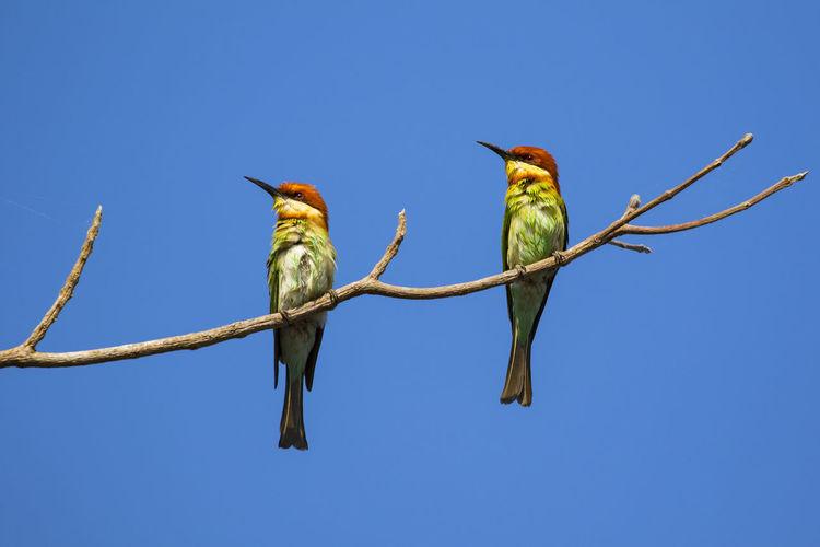 Image of bird