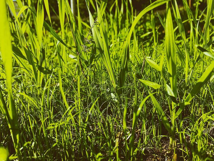 VSCO EyeEmNewHere EyeEmBestPics EyeEm Best Shots Plant Green Color Growth Beauty In Nature Nature Day No People Freshness Full Frame Close-up Wet Outdoors Water Tranquility It's About The Journey