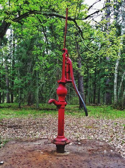 Short hike at Schoolcraft Staye Park. Cool pump. Nature Hiking Minnesota💙