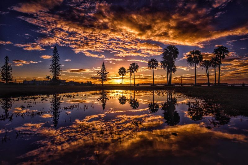 Palm trees against cloudy sky reflecting on lake at sunset