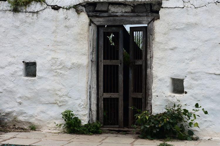 back to memories Doorway Window Door Entrance Architecture Building Exterior Built Structure Plant Open Door Creeper Plant Entryway Historic