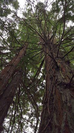 Branch Sky Tree Canopy