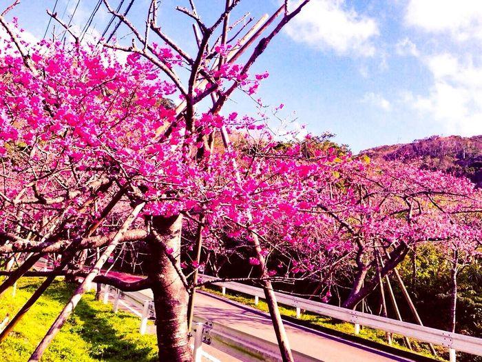 Japan OKINAWA,