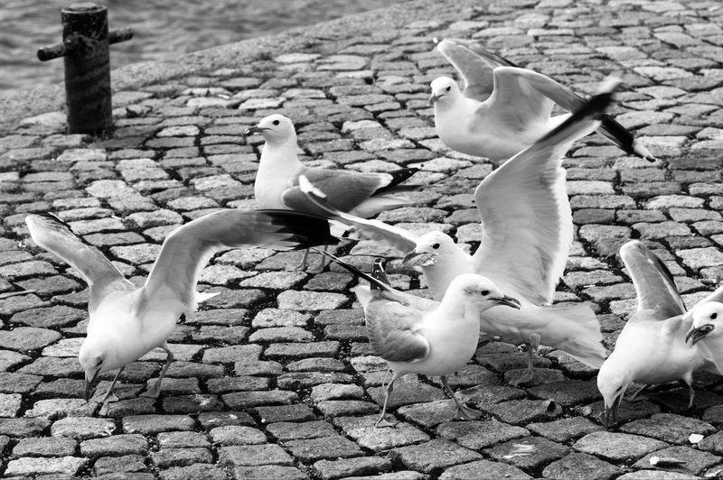 Seagulls flying over cobblestone street