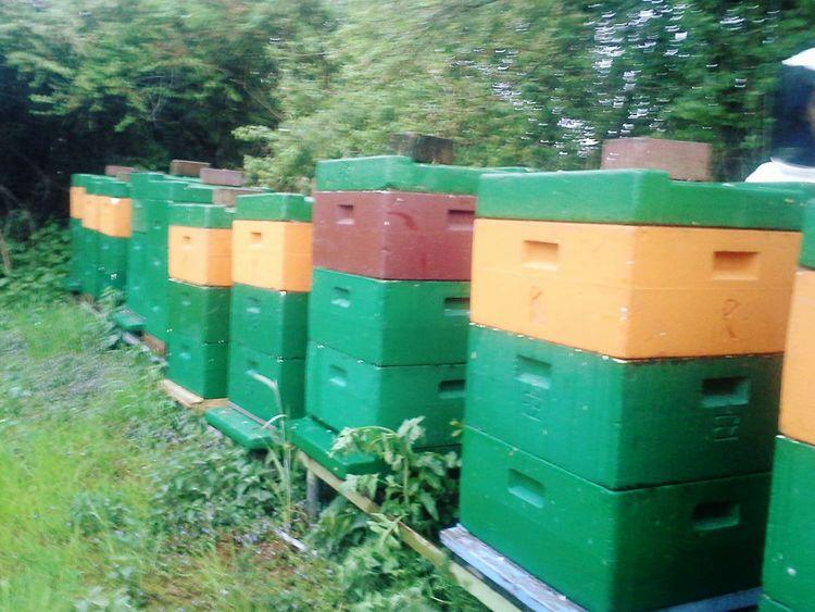 Rapsanwanderung Zwanzig15 Bienen  Imkerei Schleswigholstein