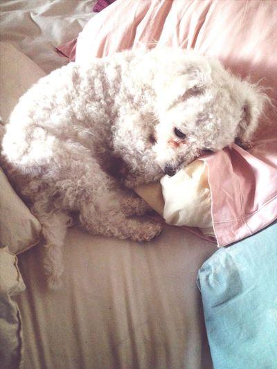 Dog Good Morning Love