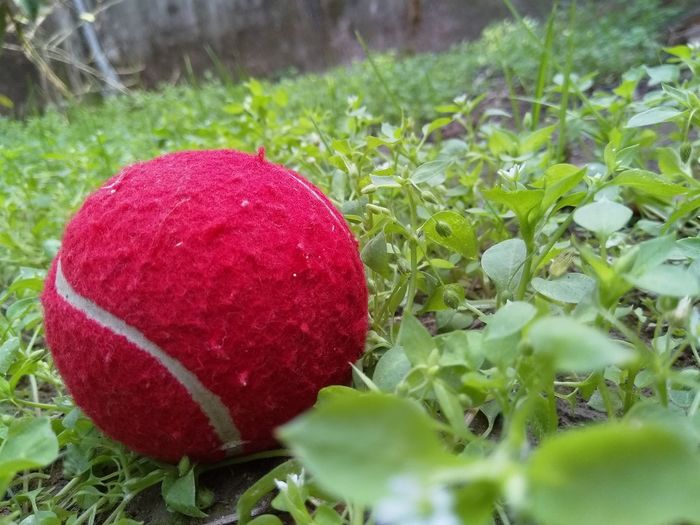 Close-up of red ball on grass