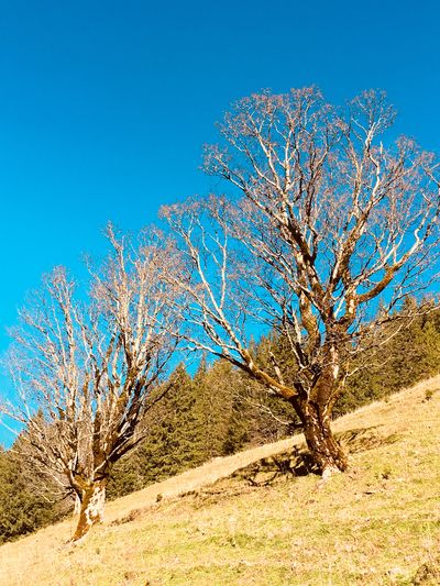 EyeEm Selects Bare Tree Tree Blue Lone Landscape Tranquility Colour Your Horizn