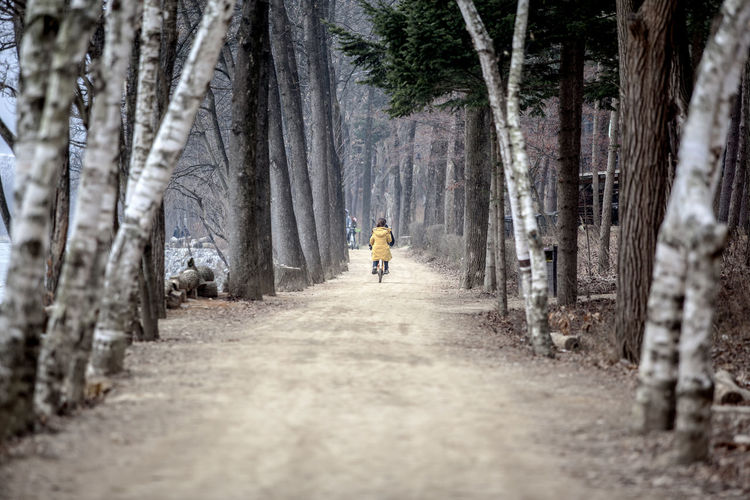 Rear view of woman riding bicycle on road in forest