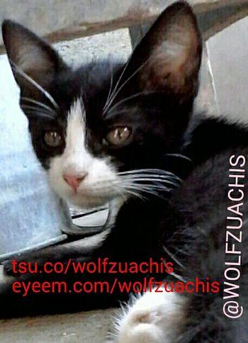 EyeEm.com Wolfzuachis EyeEm TSU Tsu.co Marked