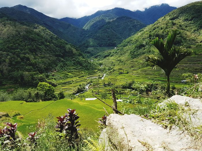 Philippines Nature Nature Photography Rice Field Banaue Rice Terraces Green Manmade Mountain Agriculture Rural Scene Field Sky Landscape Green Color Grass Terraced Field Rice Paddy The Traveler - 2018 EyeEm Awards The Great Outdoors - 2018 EyeEm Awards
