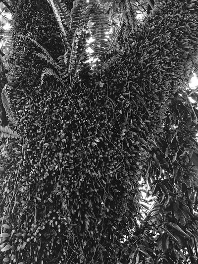 Parasite Blackandwhite Full Frame Backgrounds Low Angle View No People Day Pattern Abstract Indoors  Tree Close-up Nature