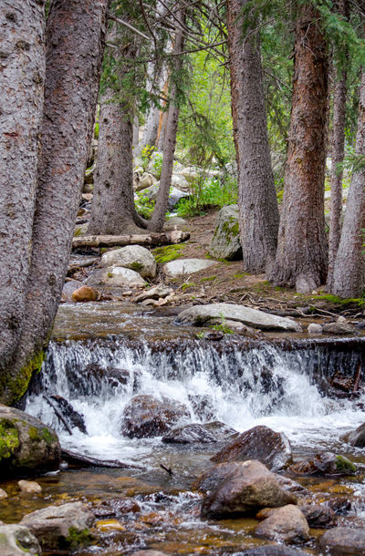 wood land waterfall in the Colorado rocky mountains Tree Forest Water Motion Plant Land Beauty In Nature Scenics - Nature No People Nature Flowing Water Waterfall Long Exposure Trunk Tree Trunk Day Blurred Motion Rock Solid Flowing Stream - Flowing Water Outdoors Power In Nature Colorado Usa