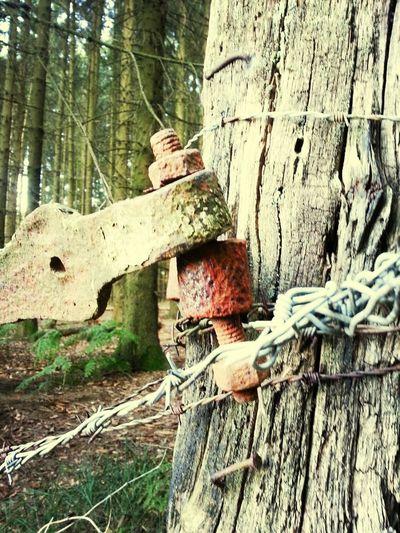 rostiges Schanier am gammeligen Zaunpfosten Wirres Zeug
