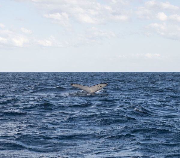 View of horse in sea