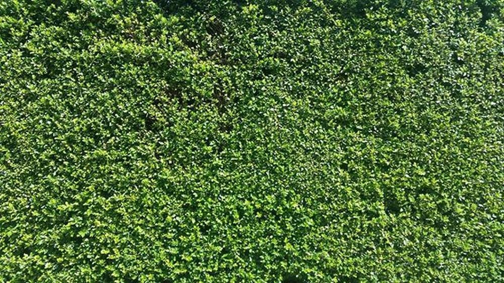 Freewallpaper Christophography Green Bush Thegreatoutdoors-2016eyeemawards Greenbush Leaves