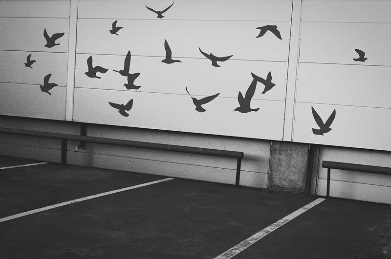City birds Parkingplace Wall Art Blackandwhite Art Streetphotography Tallinn