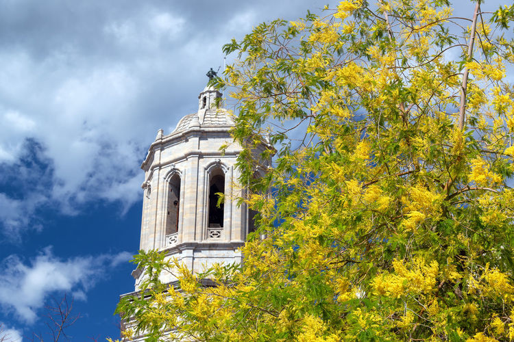 Low angle view of yellow tree by building against sky
