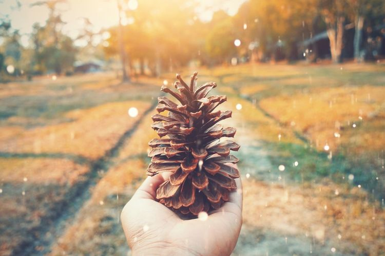 Sunshine Light Pine Cones Hand Human Hand One Person Real People Personal Perspective Human Body Part Unrecognizable Person Body Part Lifestyles Nature Holding Close-up Outdoors Day Finger