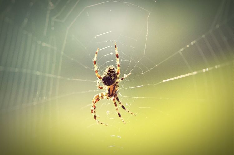Animal Animal Photography Spider Macro Photography Macro