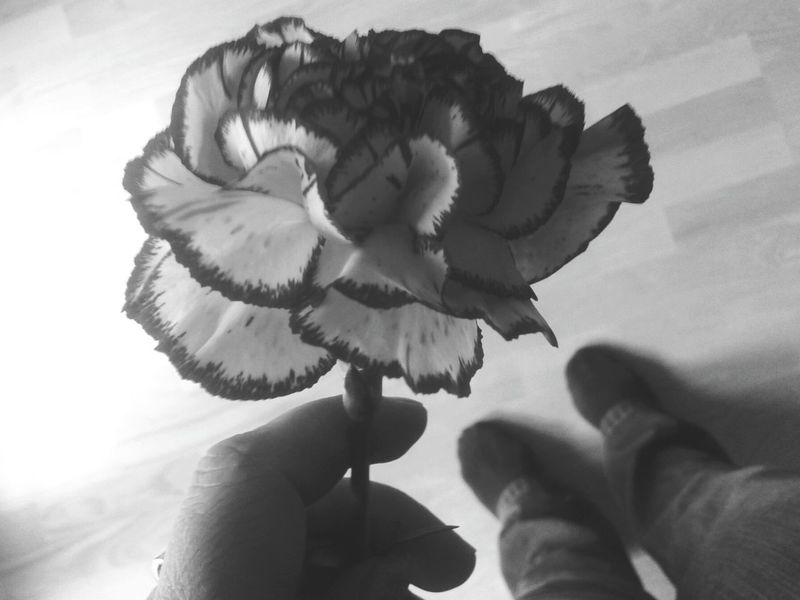 Black And White Carnation Flowers Close Up Flower Photography Flowers, Nature And Beauty Flowers Flower Collection Blossom Hand Holding Flower Blooming Carnation