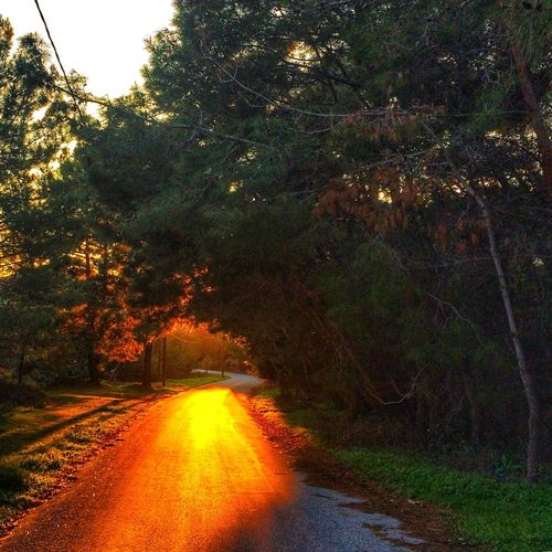 Country road Lights Trees Country Road Colours Dusk Sunset Evening Lights Sunlight Tree Nature Beauty In Nature Tranquil Scene Tranquility Road Scenics Landscape Forest