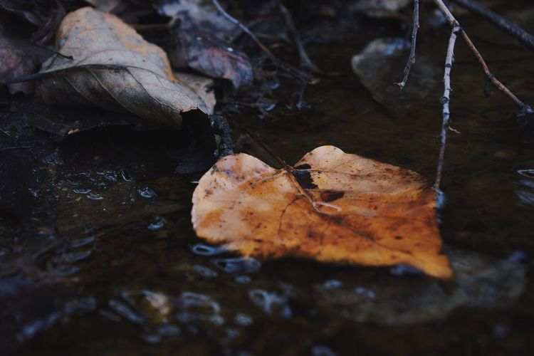 Close-Up Of Fallen Leaves In Stream During Winter