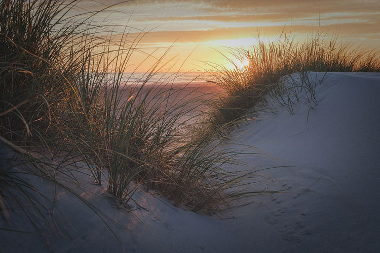 Dunes near Nymindegab during sundown Sky Water Beauty In Nature Tranquility Sunset Scenics - Nature Tranquil Scene Sea Nature Beach Land No People Grass Sand Growth Marram Grass Horizon Over Water Outdoors Timothy Grass Denmark Nymindegab Dunes EyeEmNewHere North Sea Orange Sky