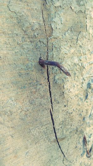 High angle view of insect on wall
