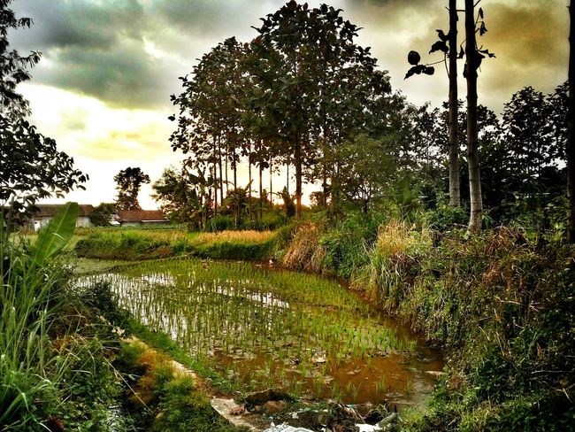 myafternoon Belajarphotography First Eyeem Photo Diedankan Sukabumi Indonesia_photography Village Alone Time Bored At Home