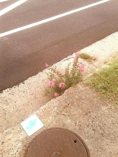 "The Week On EyeEm ""... Beauty in the struggle, ugliness in the success..""-Cole. Outthegutter Flowers Stormdrain Symbolism"