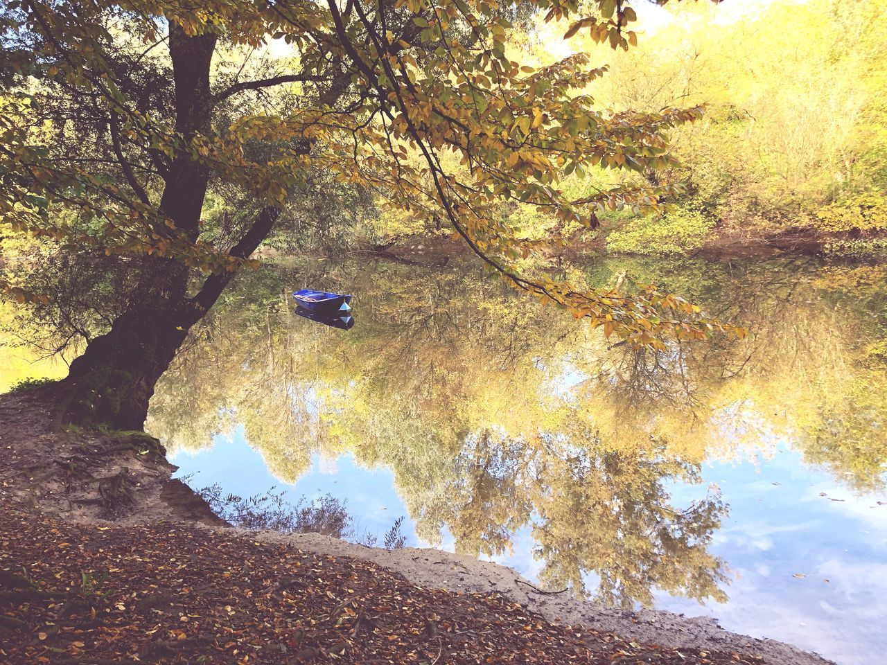 tree, plant, water, nature, beauty in nature, day, tranquility, tranquil scene, transportation, growth, land, scenics - nature, forest, lake, mode of transportation, outdoors, non-urban scene, reflection, no people